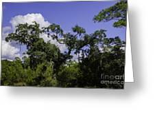 Lowcountry Life Oaks Greeting Card