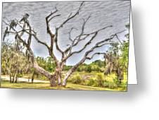 Lowcountry Marsh On Sea Island Greeting Card