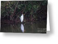 Lowcountry Pond Life Greeting Card