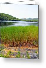 Lower Hadlock Pond Greeting Card