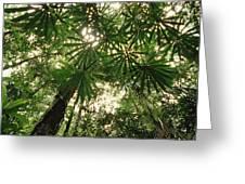 Lowland Tropical Rainforest Fan Palms Greeting Card