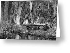 Loxahatchee Black And White Greeting Card
