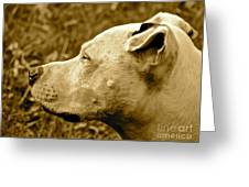 Loyalty And Strength Greeting Card by Q's House of Art ArtandFinePhotography