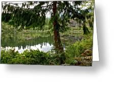Lush Green At Starvation Lake Greeting Card