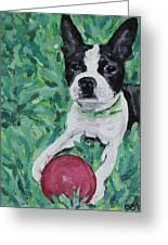 Lucy With Ball In Grass Greeting Card