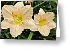 Lullaby Baby Daylilies Greeting Card