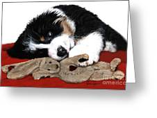 Lullaby Berner And Bunny Greeting Card