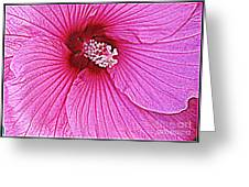 Luminescent In Pink Greeting Card