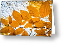 Luminescent Leaves Greeting Card