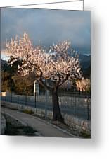 Luminous Almond Tree Greeting Card