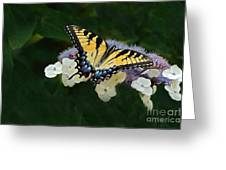 Luminous Butterfly On Lacecap Hydrangea Greeting Card