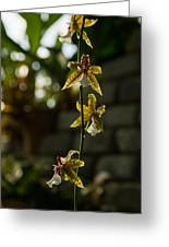 Luminous Chain Of Orchids Greeting Card