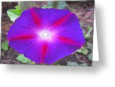 Luminous Morning Glory In Purple Shines On You Greeting Card