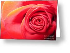 Luminous Red Rose 1 Greeting Card