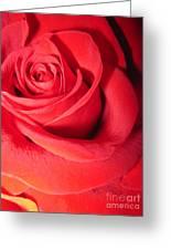 Luminous Red Rose 6 Greeting Card
