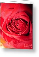 Luminous Red Rose 7 Greeting Card
