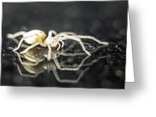 Luminous Spider Greeting Card