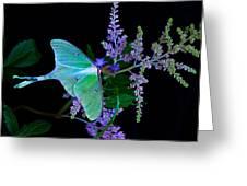Luna Moth Astilby Flower Black Greeting Card
