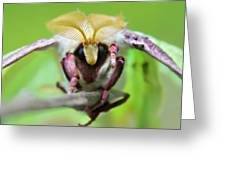 Luna Moth Greeting Card by Candice Trimble