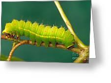Luna Moth Caterpillar Greeting Card
