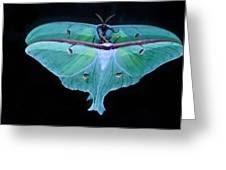 Luna Moth Mirrored Greeting Card