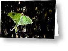 Luna Moth On Tree Greeting Card