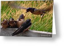 Lunch Is Served To The Fourth Baby Barn Swallow Greeting Card
