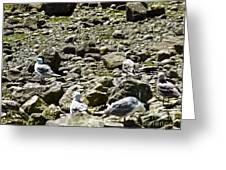 Lunch With The Gulls Greeting Card