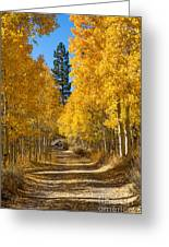 Lundy Canyon Greeting Card