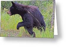 Lunging Black Bear Near Road In Grand Teton National Park-wyoming   Greeting Card