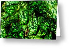 Lungwort Leaves Abstract Greeting Card