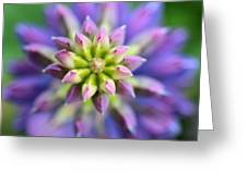 Lupine - Top Down Greeting Card