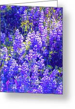 Lupine 2 Greeting Card