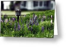 Lupine And Houses Greeting Card