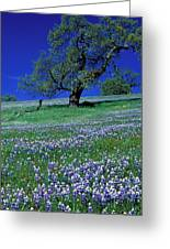 Lupine And The Leaning Tree Greeting Card