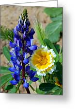 Lupine And Tidy Tip Greeting Card