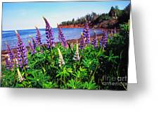 Lupine Bay Fortune Greeting Card
