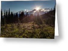 Lupine Field Sunstar Greeting Card