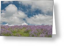 Lupine Field Under Clouds Greeting Card