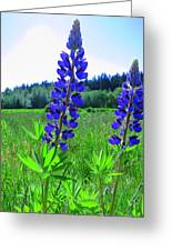 Lupine Flower Greeting Card