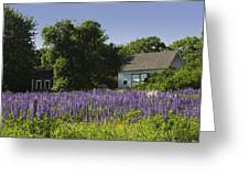 Lupine Flowers Near Round Pond Maine Greeting Card
