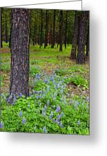 Lupine Forest Greeting Card