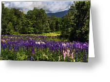 Lupine Impressions Greeting Card