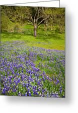 Lupine Oak Greeting Card