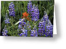 Lupine With Paintbrush 2 Greeting Card