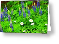 Lupines And Daisies 11 Greeting Card