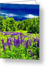 Lupines Light Greeting Card