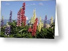 Lupinus Flowers Hokkaido Japan Greeting Card