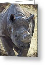 Lurching Rhino Greeting Card by Bill Tiepelman