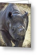Lurching Rhino Greeting Card